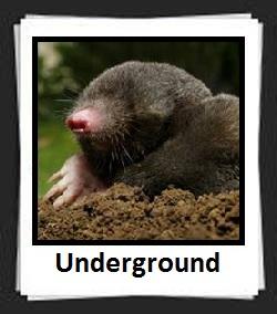 100 Pics Underground Answers