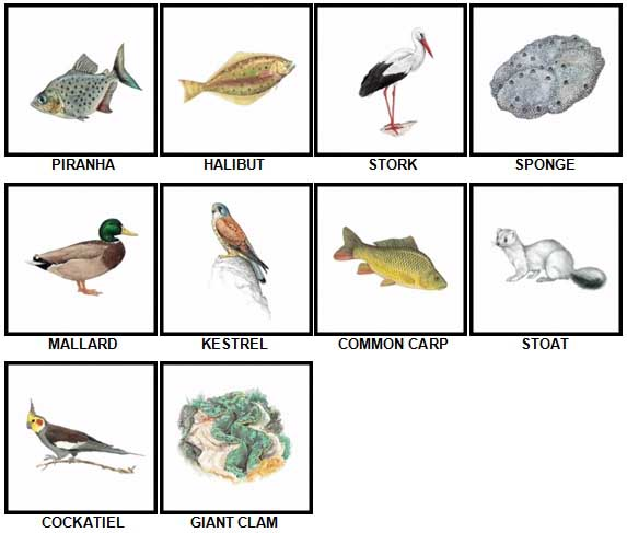 100 Pics Animal Kingdom 2 Level 11-20 Answers