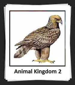 100 Pics Animal Kingdom 2 Answers
