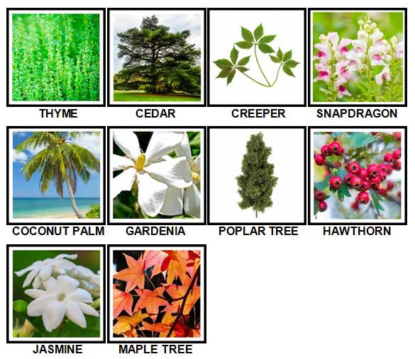100 Pics Plants Level 41-50 Answers