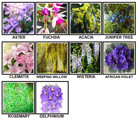 100-pics-plants-level-51-60-answers