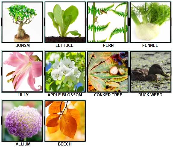 100 Pics Plants Level 61-70 Answers