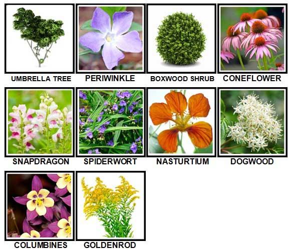 100-pics-plants-level-71-80-answers