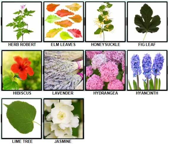 100 Pics Plants Level 71-80 Answers