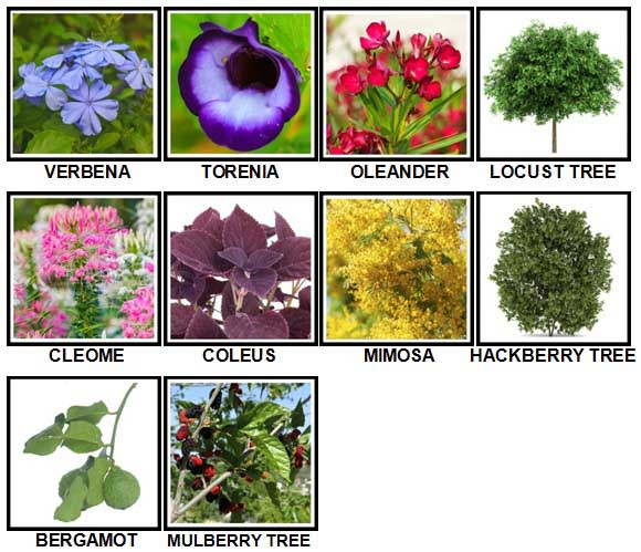 100-pics-plants-level-81-90-answers