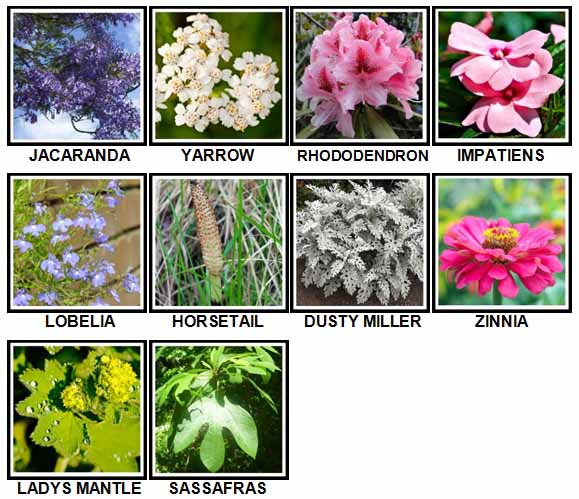 100-pics-plants-level-91-100-answers