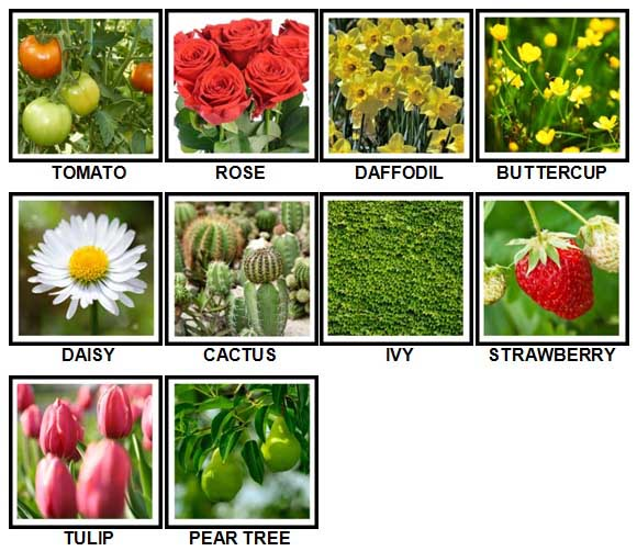 100 Pics Plants Answers Level 1-10