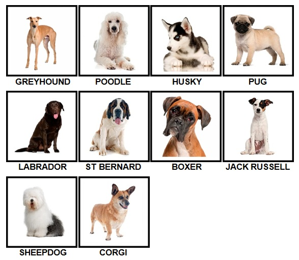 100 Pics Dog Breeds Level 1-10 Answers