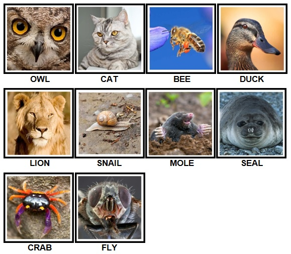 100 Pics Animals Level 1-10 Answers