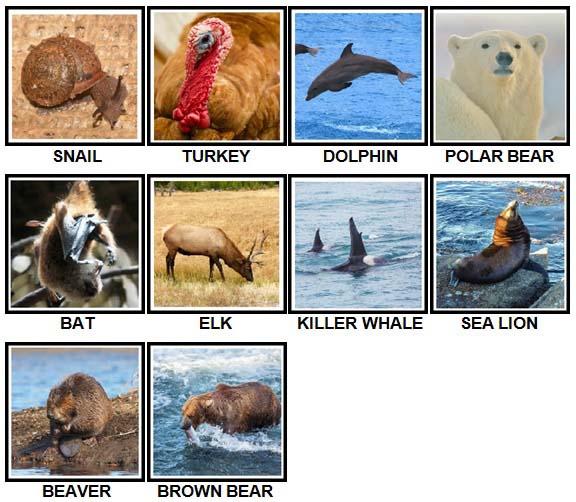 100 Pics US Wildlife Level 1-10 Answers