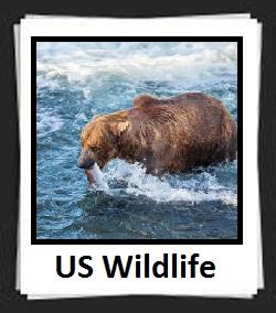100 Pics US Wildlife Answers