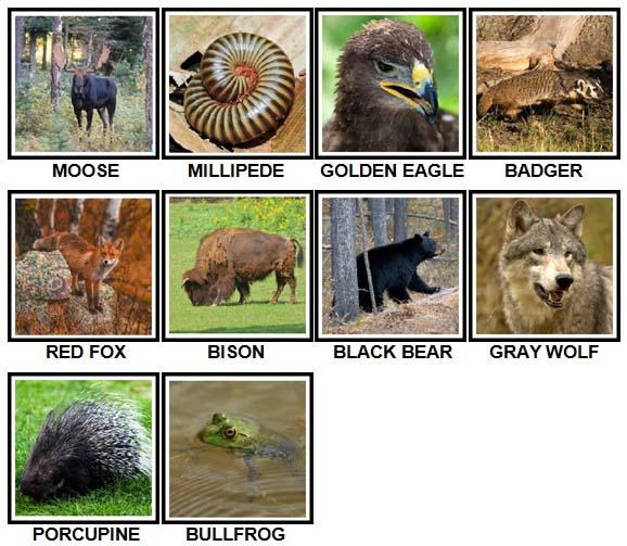 100 Pics US Wildlife Level 11-20 Answers