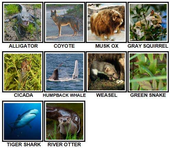 100 Pics US Wildlife Level 21-30 Answers
