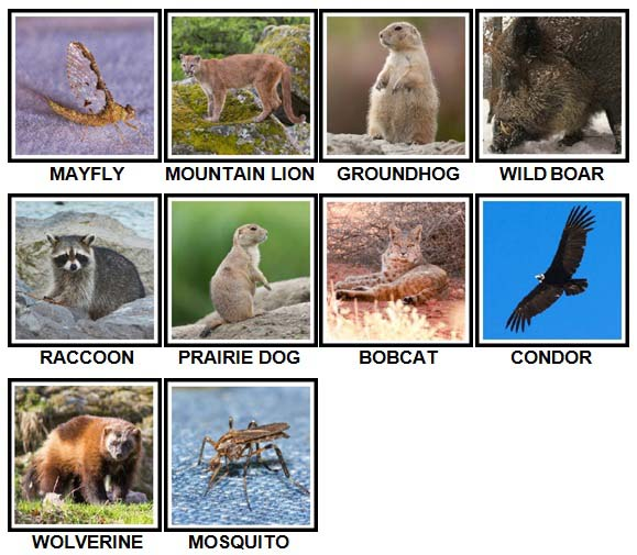 100 Pics US Wildlife Level 31-40 Answers