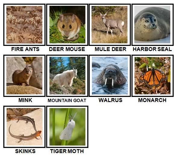 100 Pics US Wildlife Level 41-50 Answers