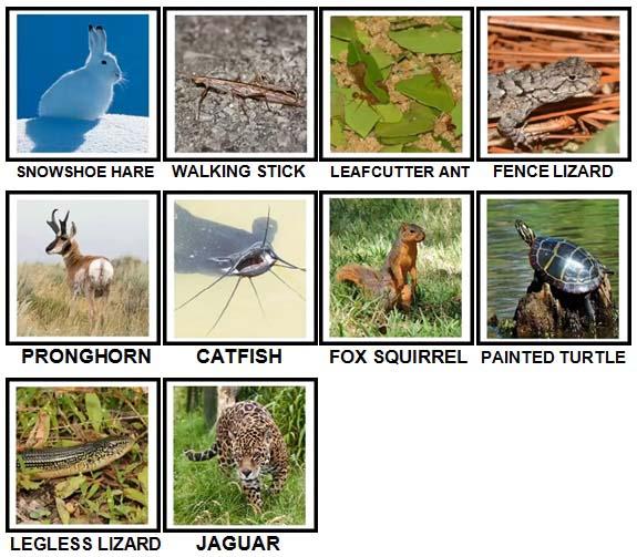 100 Pics US Wildlife Level 71-80 Answers