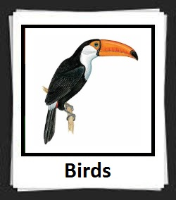 100 Pics Birds Answers