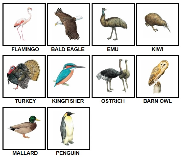 100 Pics Birds Level 1-10 Answers