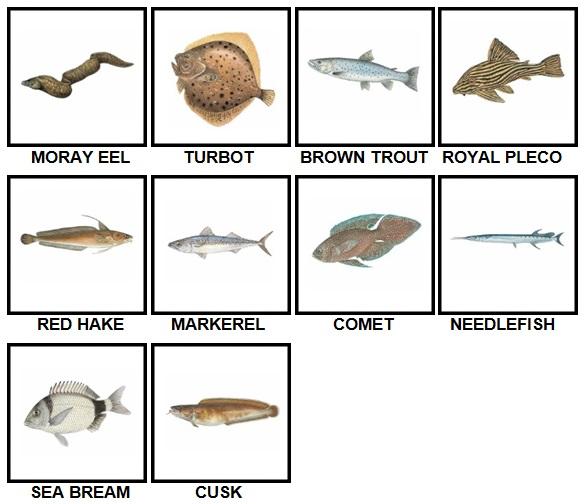 100 Pics Fish Level 31-40 Answers