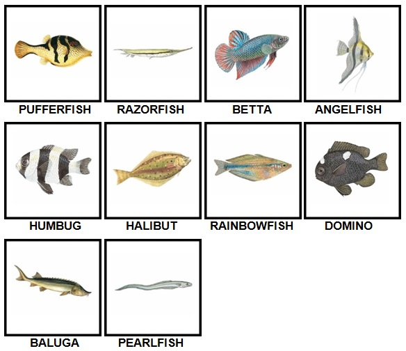 100 Pics Fish Level 41-50 Answers