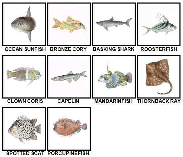 100 Pics Fish Level 81-90 Answers