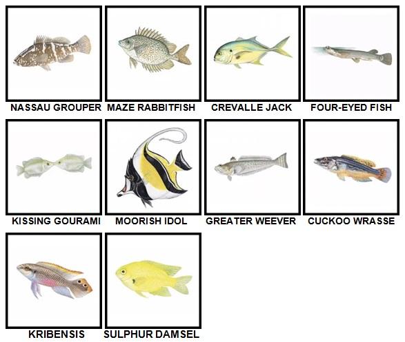 100 Pics Fish Level 91-100 Answers