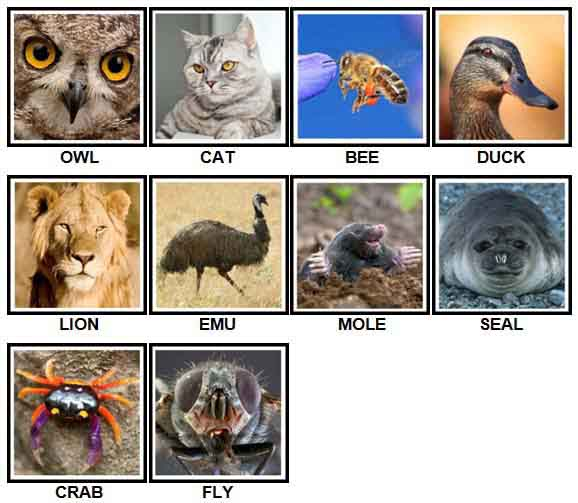 100 Pics Animals Answers Level 1-10