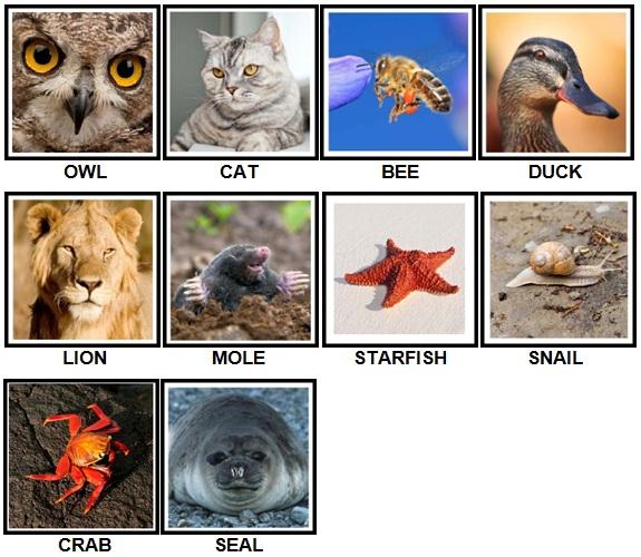 100 Pics Animals Level 1-10 New Answers